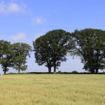 Hünengrab Karlsminde